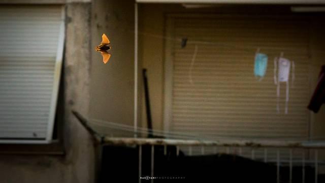 'Izađem na balkon da uhvatim malo zraka. Kad ono - šišmiš!'