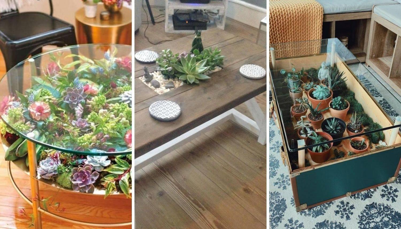 Sukulent-vrt na stolu novi je hit!
