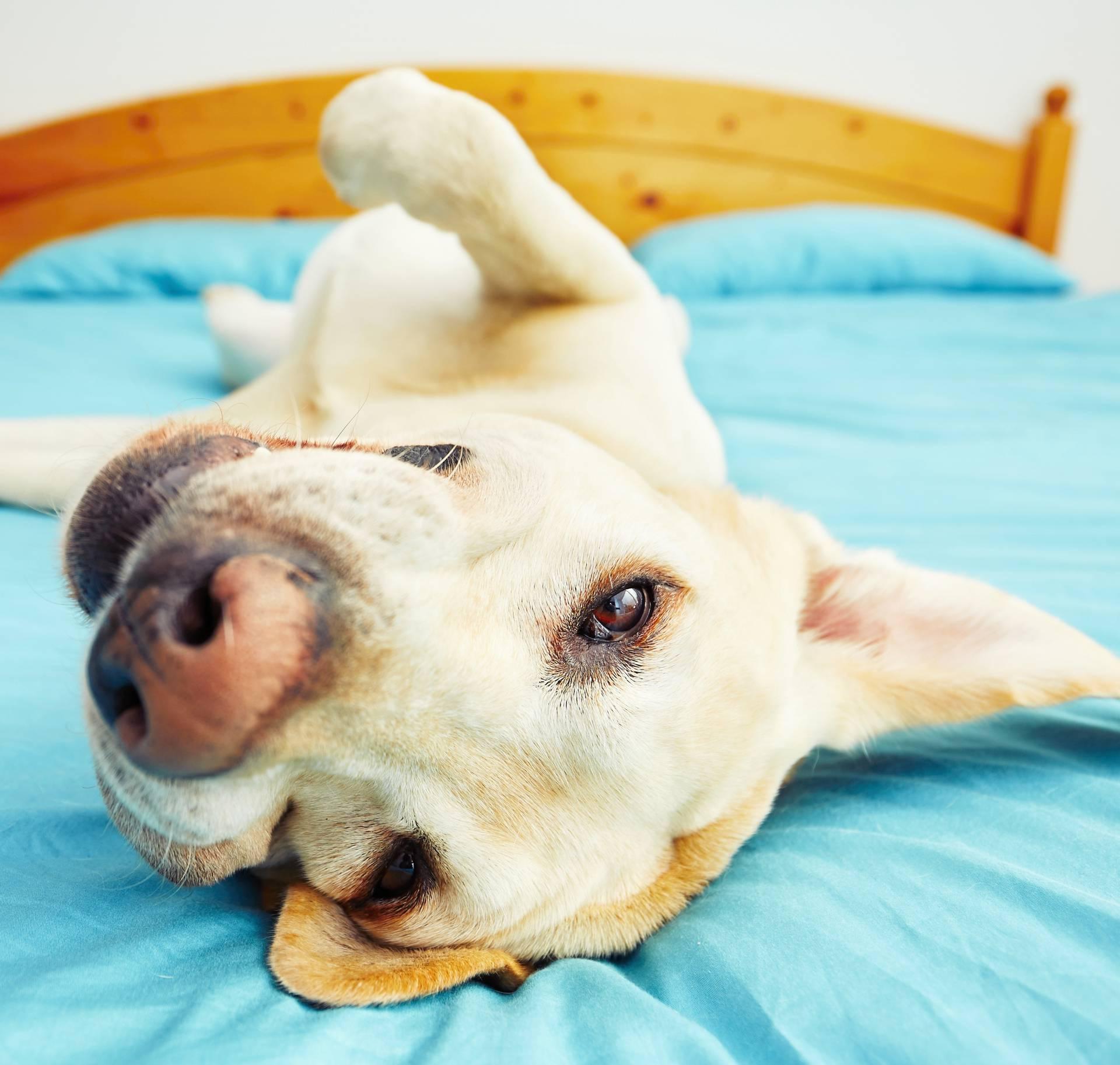 Psi imitiraju ljude dok zijevaju pa čak i kad samo čuju taj zvuk