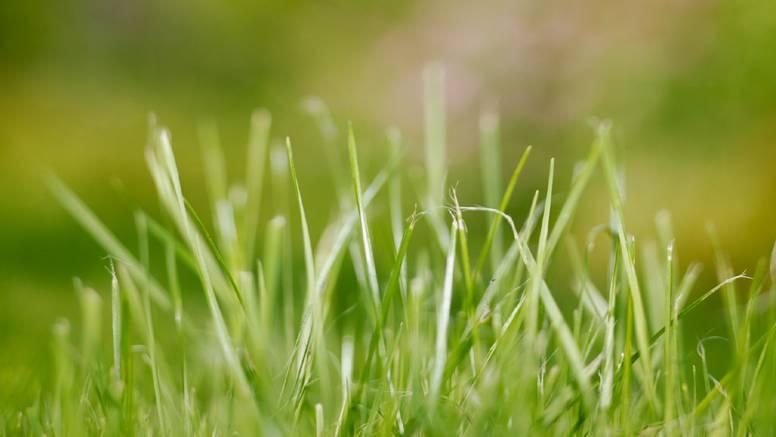 Bujna i gusta trava: Savjeti za lijepi travnjak