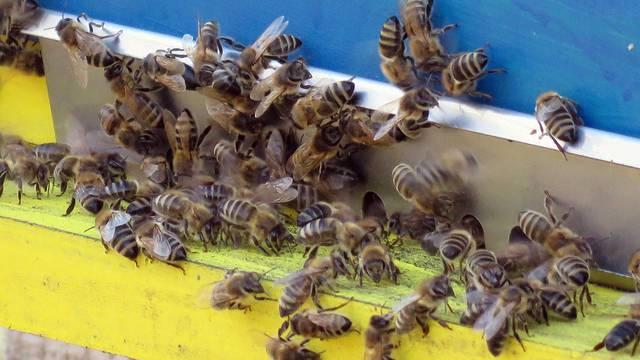 Kutina: Dimio  pčele pa zapalio vikendicu, šteta 20.000 kuna