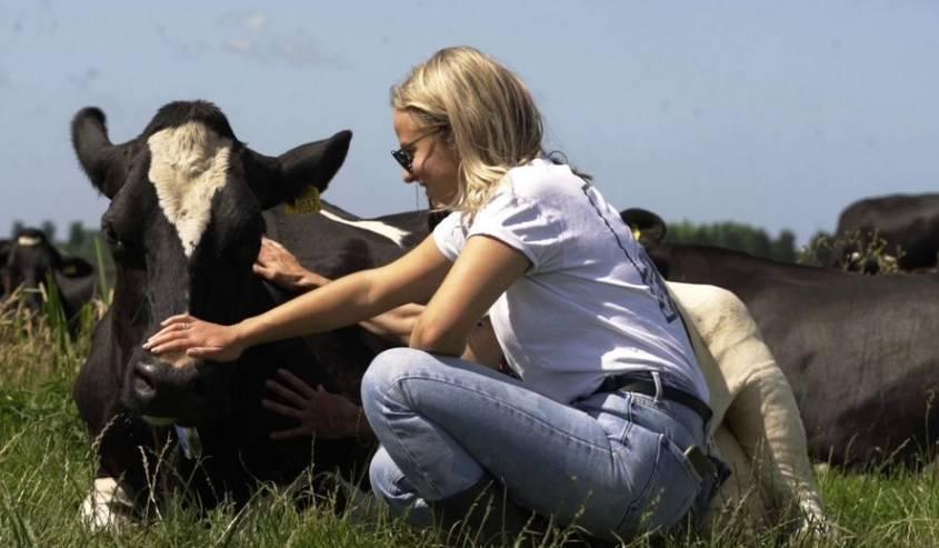 Maženje krava kao antistres metoda