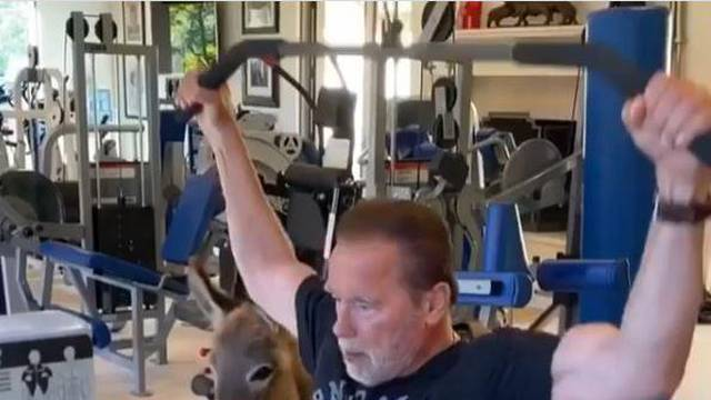 'Terminator' vježba u teretani, a 'kontrolira' ga magarac Lulu