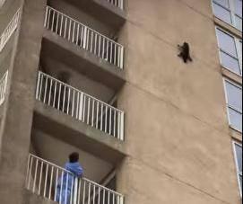 Avantura ludog rakuna: Popeo se na neboder pa krenuo kliziti