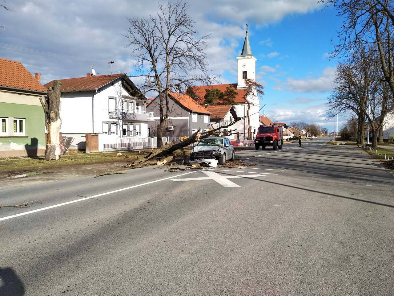 Užas u Trnjanima: Stablo palo na auto u vožnji i smrskalo ga!