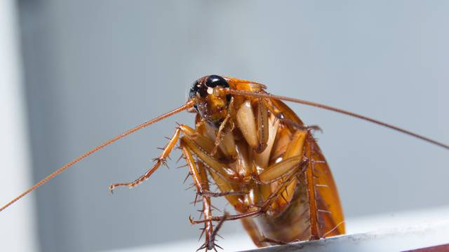 Genijalan trik kako se riješiti žohara i pauka jednom zauvijek