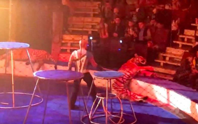 Ruski cirkus: Tigrica preskočila vatreni obruč i onesvijestila se