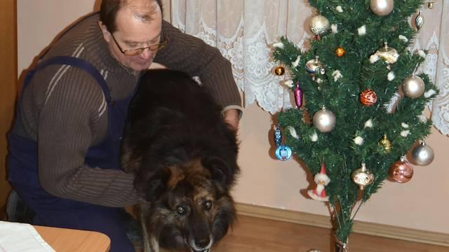 Božić na slobodi: Pas Medo će svoj brk omastiti janjetinom