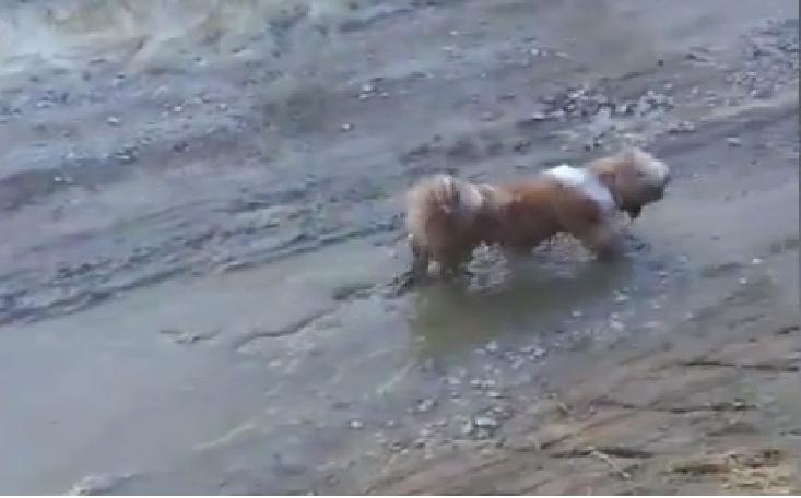 Prljavica Kira: Mala kujica jako voli ležati u blatnim lokvama
