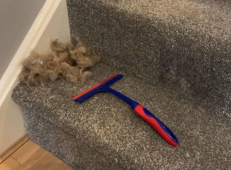Trik kako očistiti tepih bolje od usisavača, vrlo je jednostavno