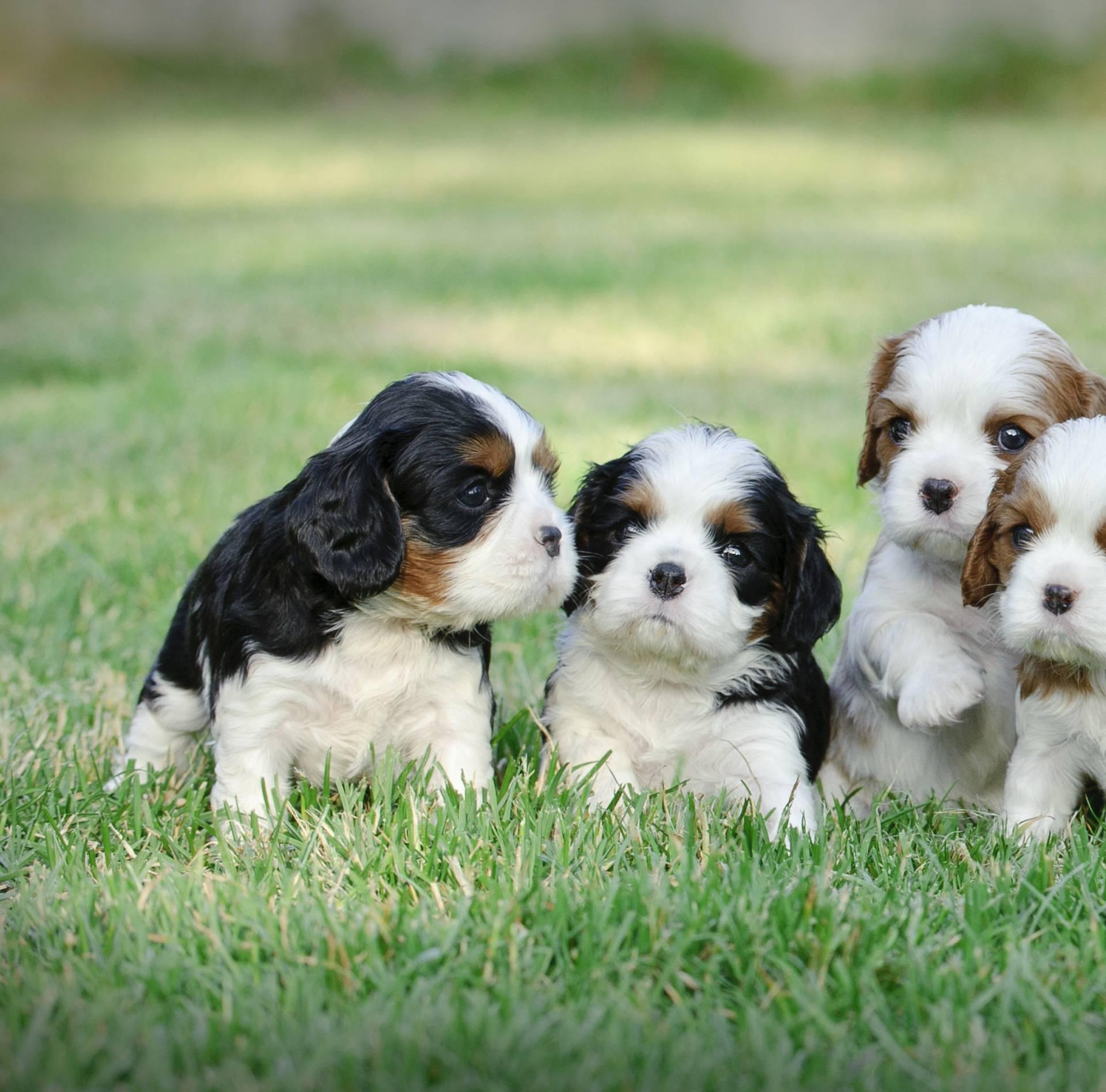 Na ove situacije se trebate pripremiti ako uzimate štenca