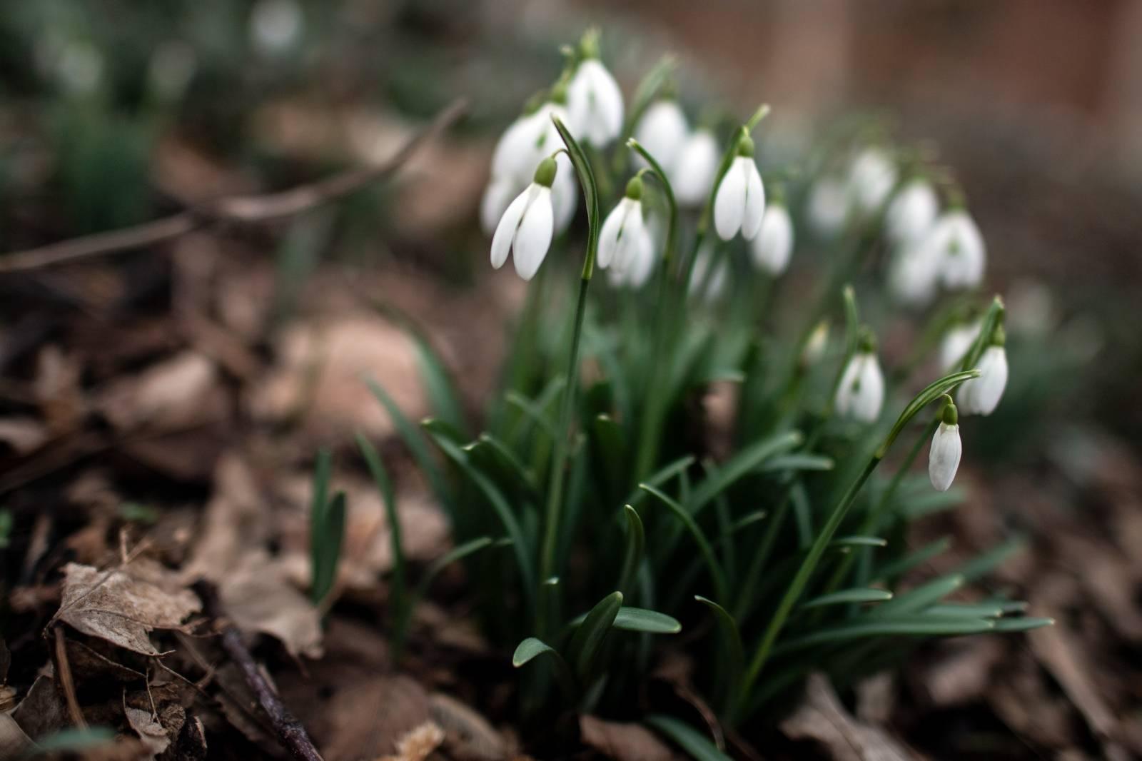 Spring Awakening - Cologne