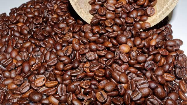 Pronađena 'zaboravljena' vrsta divlje kave koja je kao Arabica