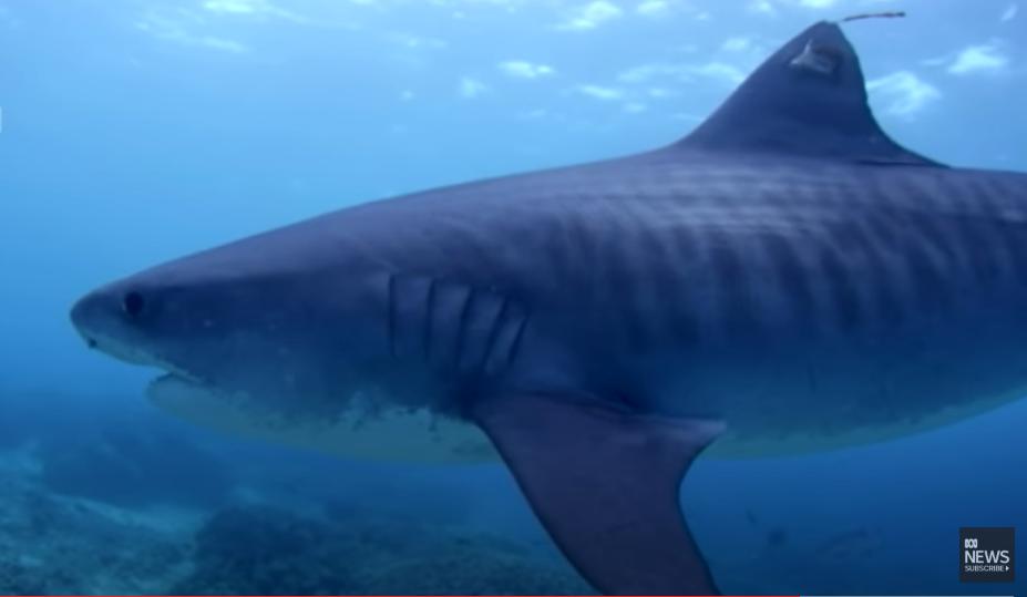 Ronioca (36) morski pas ugrizao za noge: Nisu ga uspjeli spasiti