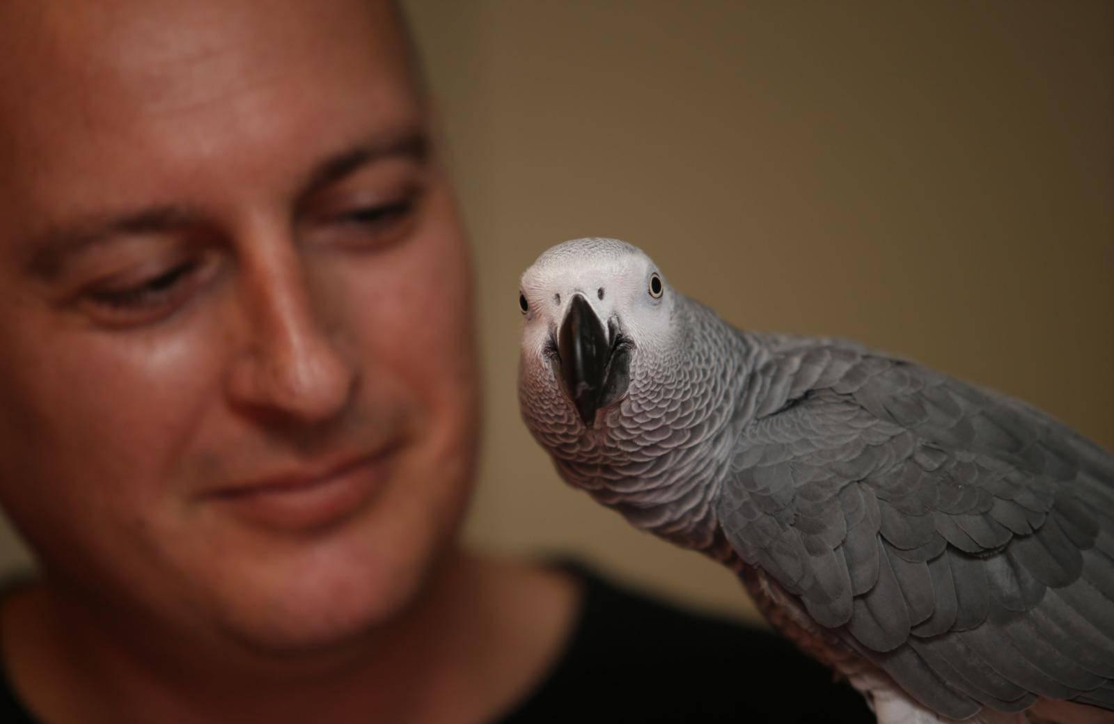 Hugo upozorava svog vlasnika: 'Ako već ideš van, stavi masku'