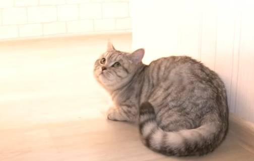 """Prodao mačka za 583.000 kn: """"Ne lažem, on kontrolira misli"""""""