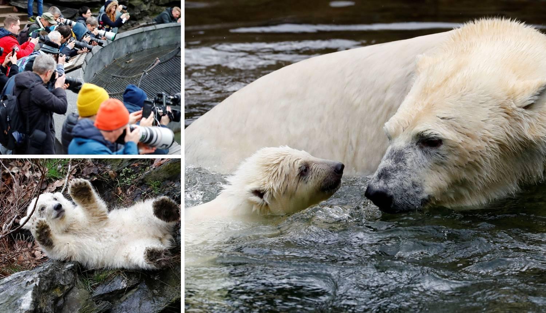 Nasljednik Knuta: Novi polarni medo igrao se, plivao i prskao