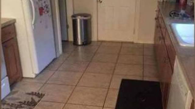 Možete li pronaći psa na ovoj fotki? Rijetki pojedinci ga vide