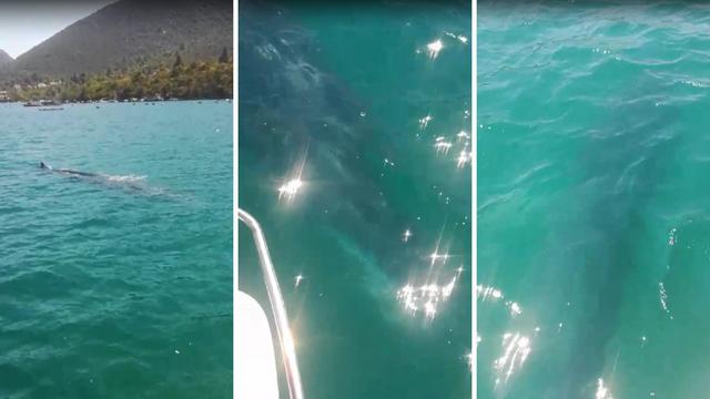 Plovili zaljevom i ugledali kita: Normalno da te bude malo strah