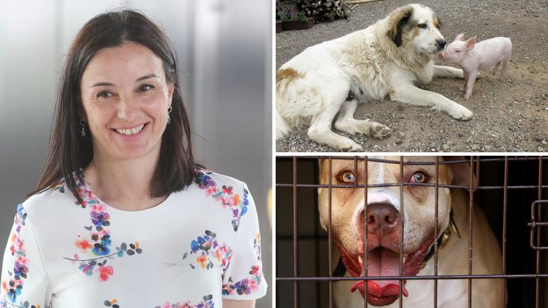 Prijedlog pravilnika o opasnim psima zgrozio stručnjake: Vidite je li i vaš pas 'krvoločna zvijer'?