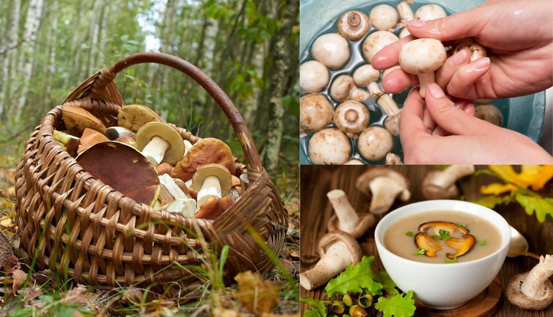 Što je sigurnije: Treba li gljive oprati ili samo očistiti četkicom?