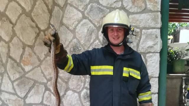Zmija im se zavukla u odvod, vatrogasci je vratili u prirodu