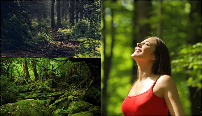Idite u šumu: Terapija drvećem puni energijom i pomlađuje
