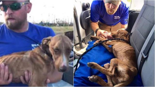 Psić pronađen živ, mjesec dana nakon uragana: Ime mu je Čudo