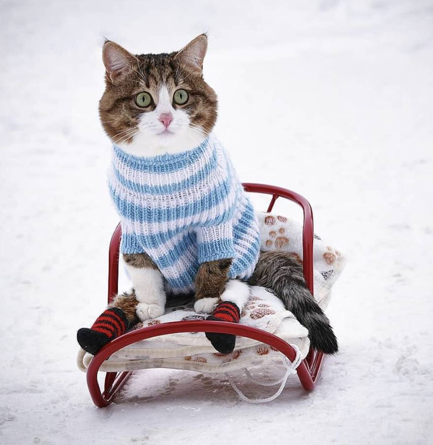 Rexi je posebna maca: Jede kao čovjek, postao je mačji celebrity
