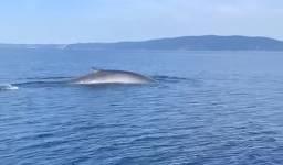 Ribari poručili kitu: Ajde izroni još jedanput da se use*emo...