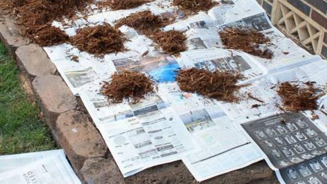 Oduševila korisnike trikom za istrebljivanje korova u vrtu: Za to vam trebaju tek dva sastojka
