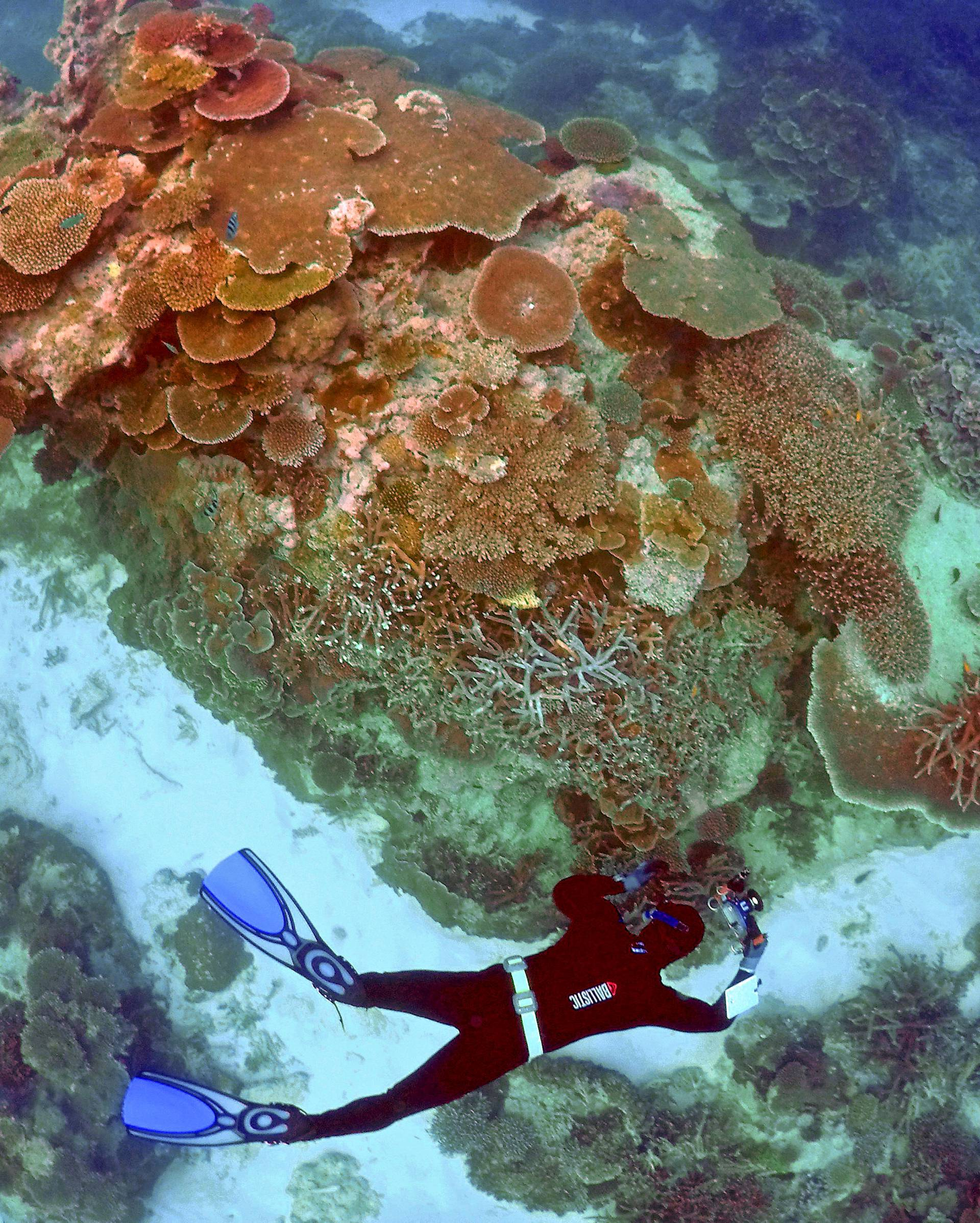 FILE PHOTO --  Oliver Lanyon takes photographs and notes during an inspection of the reef's condition in an area called the 'Coral Gardens' located at Lady Elliot Island