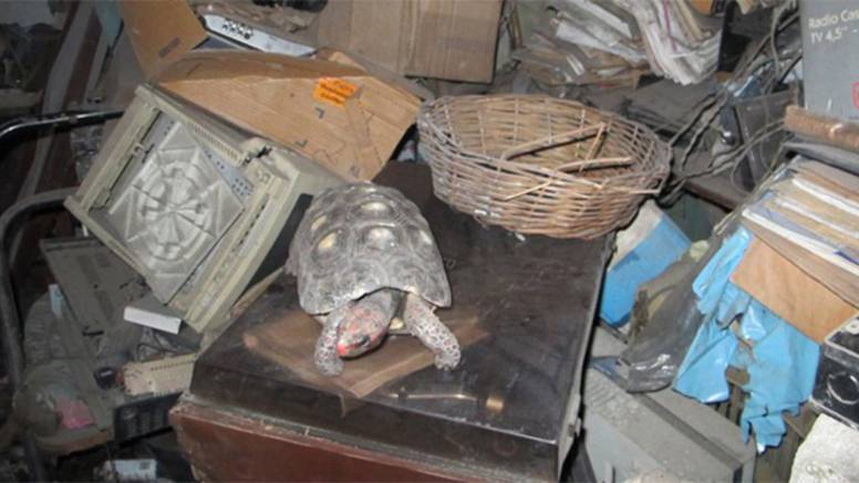 Kornjača Manuela preživjela je  30 godina zatvorena u kutiji
