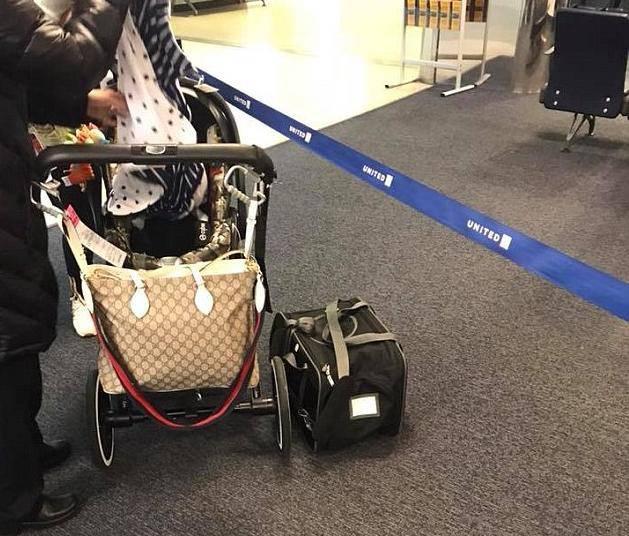 Pas uginuo u avionu, stavili su ga u odjeljak za ručnu prtljagu