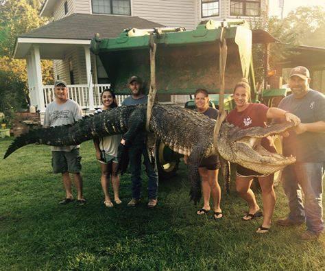 Postala je rekorderka: Uhvatila aligatora od 4,2 metra i 317 kg