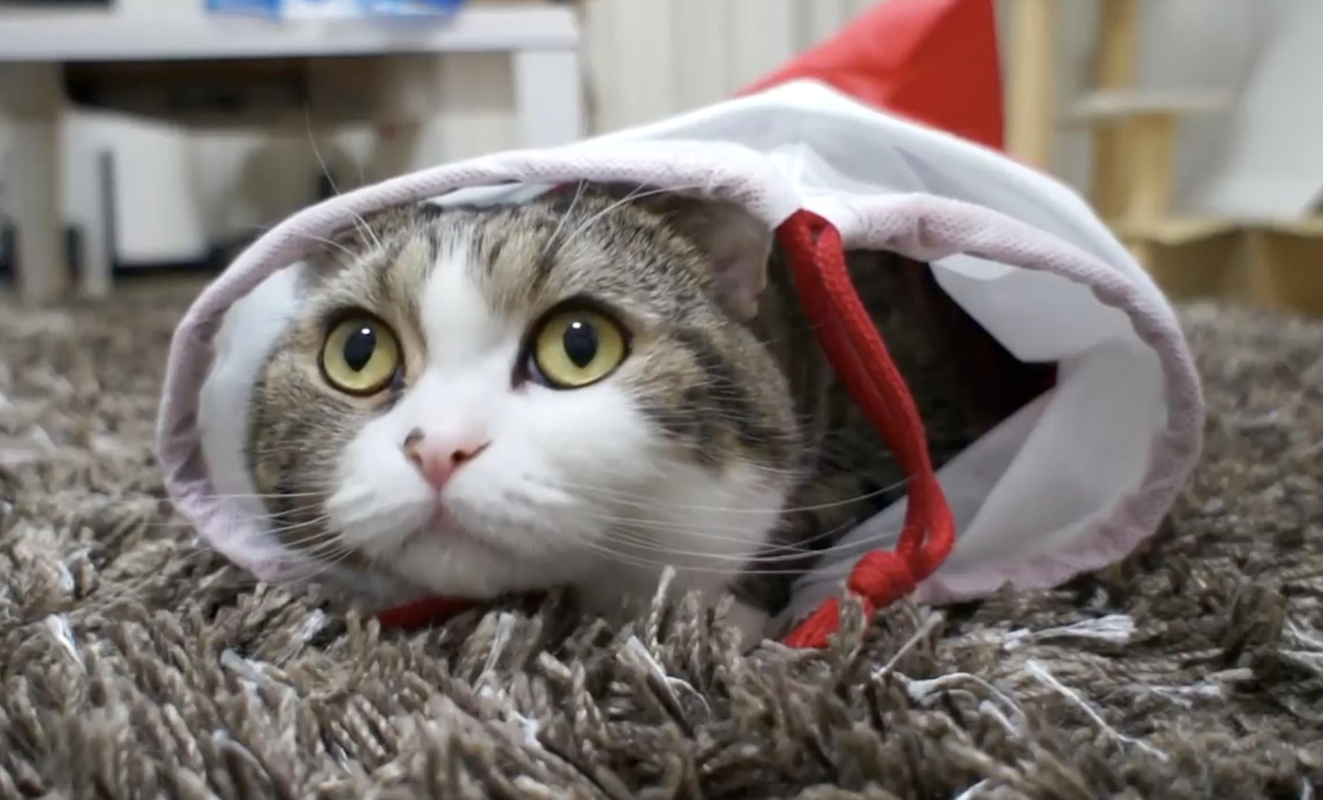 Maru je mačak koji bi i miša dao za praznu kartonsku kutiju