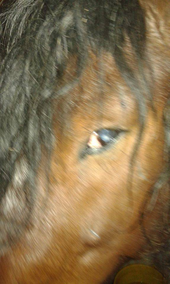 Konja isjekao sjekirom, izbio mu oko i ostavio ga da ugine