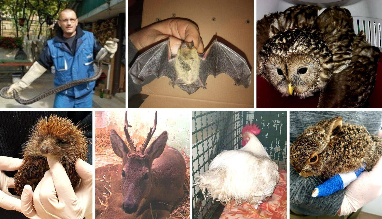 Neobična spašavanja Dumovca: Šišmiši, piton, iguana, paun...