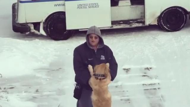 Mladi retriver Moose obožava poštara - čeka ga za zagrljaj
