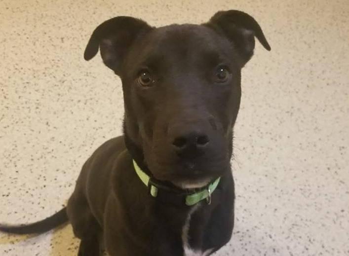 Pas preživio eutanaziju: 'On je gledao u mene i mahao repom'