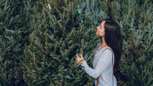Prije nego kupite drvce: Uz ovih par trikova nemojte pogriješiti