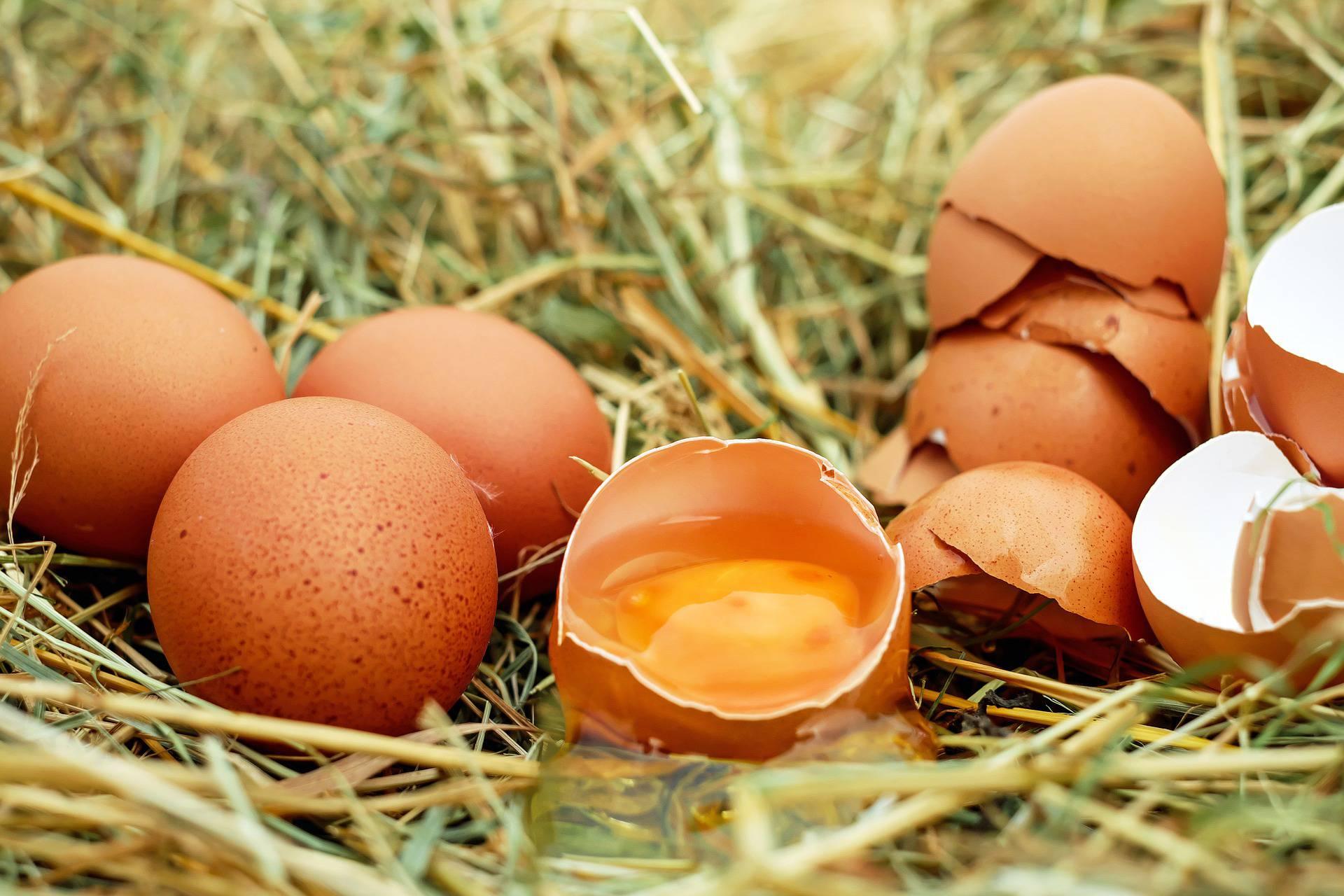 Prevencija salmonele: Evo kako kupiti, čuvati i pripremati jaja