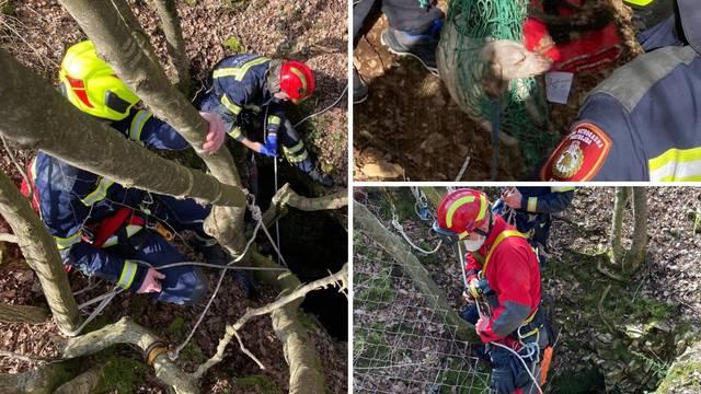 Pas upao u jamu, tri dana je cvilio, izvukli ga vatrogasci