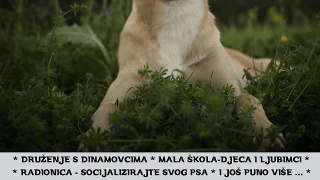 Azil Dumovec