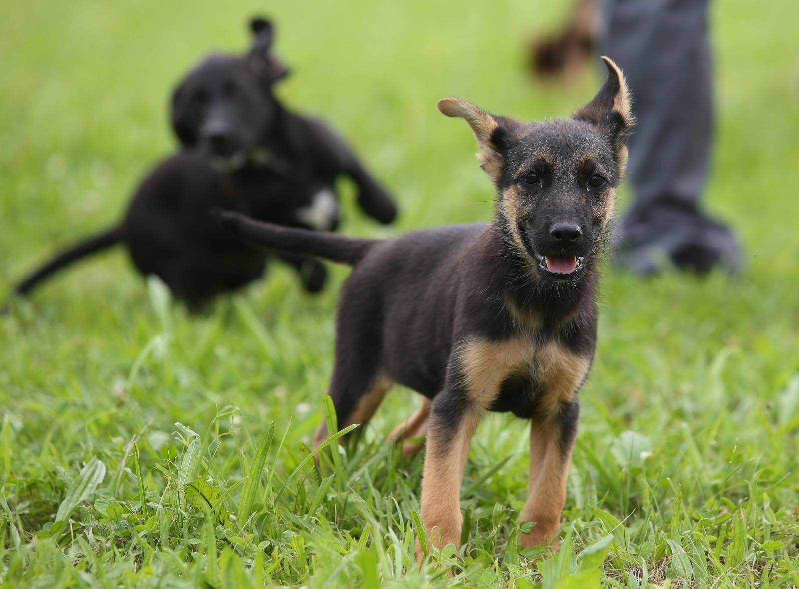 'Preplavljeni smo odbačenim štencima, dođite i udomite ih'