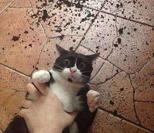 Smiješne fotke mačaka