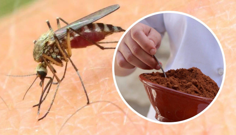 Spas od komaraca: Odličan trik s osušenim talogom crne kave