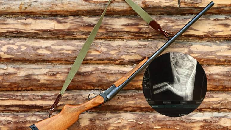 Lovac u Zagorju mački slomio vrat i ispalio u nju 20 hitaca