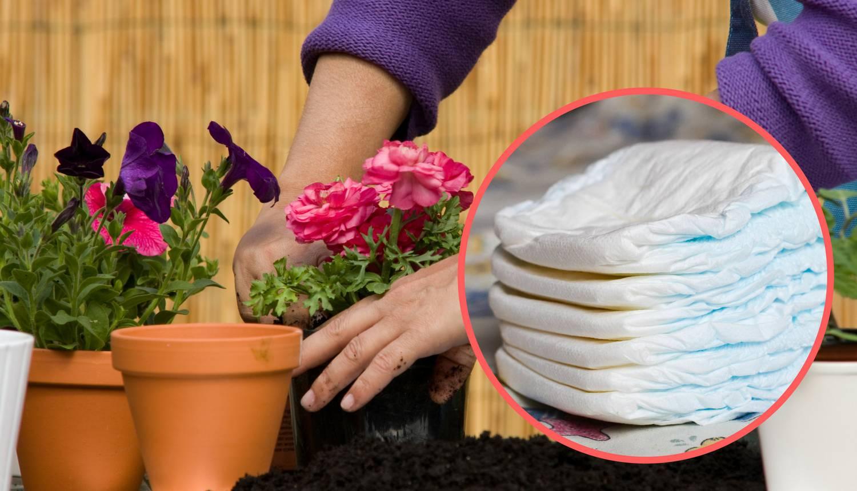 Genijalan trik kako dječjom pelenom spasiti biljke u tegli