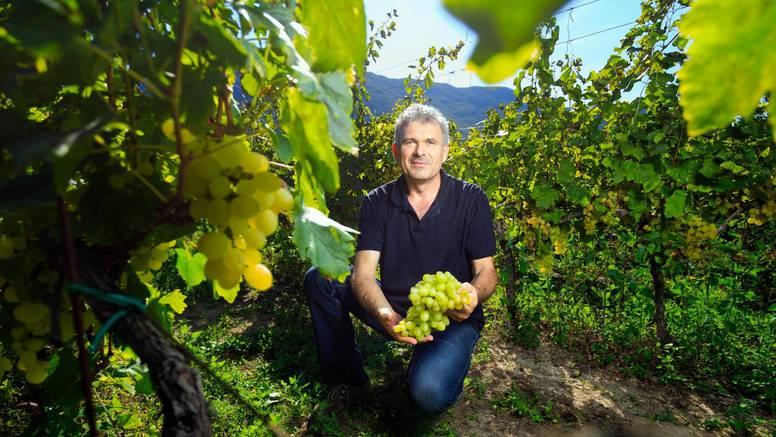Vrgorački vinar: 'Stolno grožđe beremo, a za vinsko strepimo'